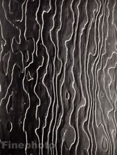 1953/83 Vintage Texture On Wood Abstract By YOUSUF KARSH Duotone Photo Art 8x10