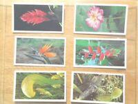 Grandee WONDERS OF NATURE tropical plant animal set 30 card Tobacco Cigarette