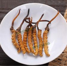 High Grade Tibet Naqu Dong Chong Xia Cao Cordyceps Sinensis 4 Roots 1g