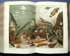 1889 ORIG.ANTICA CROMOLITO - AQUARIUM-ACQUARIO.Meyers..
