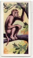 Monkey Primate Vintage Ad Trade Card