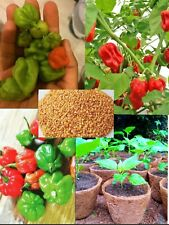 Organic Super Hot Carolina Reaper Chilli Pepper Seeds