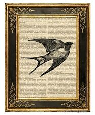 Swallow Art Print on Antique Book Page Vintage Illustration Small Birds Martins