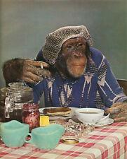 1959 Vintage MONKEY HUMOR Chimpanzee BREAKFAST Kitchen Smoking Animal Photo Art