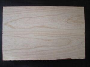 swamp ash Sumpfesche leicht blank Rohling 57x37x4,5cm Gitarre Bass Tonholz SE10