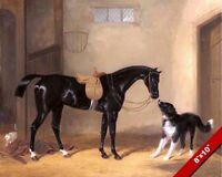 THE BLACK HUNTER HORSE IN SADDLE& DOG OIL PAINTING ART REAL CANVAS GICLEEPRINT