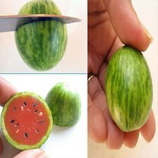 10 X Seeds Cucamelon Mini Watermelon Red Miniature Fruit Home Yard Garden Plant