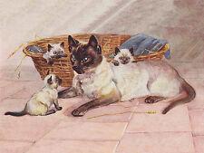 CAT KITTEN PRINT BEAUTIFUL SIAMESE CAT AND HER KITTENS