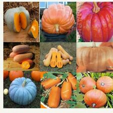 Pumpkin Seeds  9 pack Different grades Heirloom Vegetable Seed