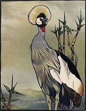 Vintage Detmold Art Print African Wildlife Ugandas Crest Bird Grey Crested Crane