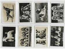 More details for ja pattreiouex dogs complete set 48 cigarette cards in good/very good condition