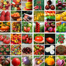 200pcs Mixed Tomato Home Garden Vegetable Fruit Seed Seeds