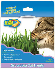 COSMIC KITTY CAT GRASS SEED KIT KITTY HERB CAT KITTEN TREAT CATNIP FREE SHIP USA