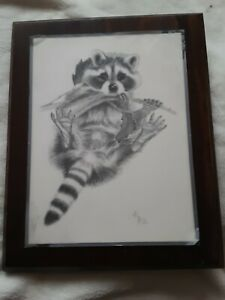 RARE Raccoon drawing signed by P. Harvey w/year framed on wood plaque