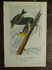 "Antique John J. Audubon hand-colored lithograph ""Pine Creeping Wood Warbler"""