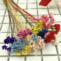 30x Dried FLOWER Pressed Bunch of Flowers with Branches Dried Floral Home Decor