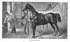 BROUGHAM HARNESS HORSE IN STABLE, ANTIQUE ENGRAVING
