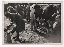 PHOTO DE PRESSE Lait Traite des vaches Agriculture Mamelle Broc de lait Troupeau