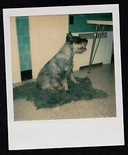 Old Vintage Polaroid Photograph Adorable Puppy Dog Sitting on Fur Rug in Kitchen