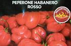 20 SEMI DI PEPERONCINO PICCANTISSIMO HABANERO ROSSO