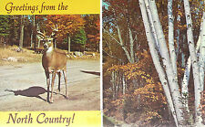 Greetings From The North Country   Deer and Forest     Unused  Edged  Postcard