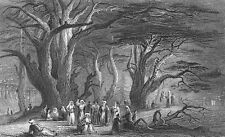 CEDARS OF LEBANON FOREST STATE PARK Cedrus Libani ~ Old 1838 Art Print Engraving