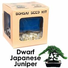 Dwarf Japanese Juniper Bonsai Complete Seed Kit, Woody Grow Live Japanese Tree