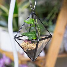 Modern Succulents Bonsai Hanging Planter Plant Pot Glass Geometric Terrarium