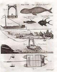 1797 GEORGIAN PRINT ~ VARIOUS BRIDGES + DESCRIPTIVE TEXT 18thC ~ WHALE FISH etc