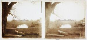 FRANCE Tronc d'arbre Photo Plaque de verre Stereo Vintage c1910