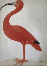 "perfect 24x36 oil painting handpainted on canvas""The red ibis with an egg""N5789"