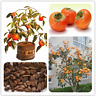 20 Pcs Seeds Persimmon Bonsai Diospyros Kaki Fruit Tree Home Garden Plants NEW U