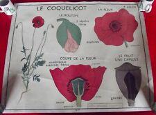 Ancienne Affiche scolaire Rossignol Fleur Giroflée Coquelicot graine Gousse