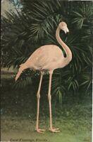 Vintage Postcard, Coral Flamingo Florida, Linen. pb15