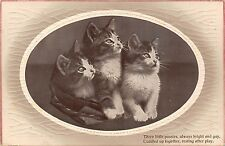 POSTCARD    CATS      Three    Little   Pussies