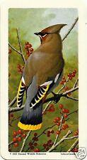 RED ROSE TEA CARD, SERIES: CANADIAN/AMERICAN SONGBIRDS, BOHEMIAN WAXWING