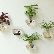 Hexagon Transparent Glass Vase Wall Hanging Desk Decor Flower Plant Terrarium UK