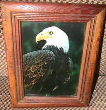 Weißkopf Seeadler Adler American Bald Eagle Ornithologe Alaska Vogel Bild Rahmen
