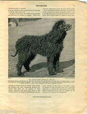 1930 Book Plate Print Dog Irish Water Spaniel Nina Scott Langley Sketch Drawing