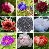 120 Peony Seeds 6 Colors Blue Green White Black Red Pink Peony Flower Seed J7L3