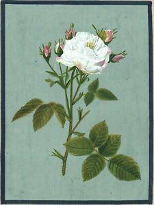Indian Mughal White Rose Flower Miniature Painting Floral Handmade Decor Art
