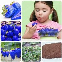 500 Pcs Seeds Sweet Blue Strawberry Bonsai Fruit Vegetable Plants Juicy Balcony