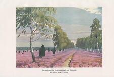 Heidelandschaft Heide Deutschland Birken Wachholder FARBDRUCK von 1898