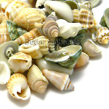 Lot of 100 Small Assorted Whole Sea Shell Seashell Charms and Beads with Holes