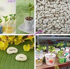 20pcs Hotsale Magic Bean Seeds Plant Growing Message Word for kids Lover Gift Y2