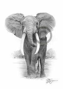 ELEPHANT art pencil drawing print A3 / A4 signed by artist Gary Tymon artwork