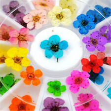 Real 12 Color Dry Dried Flower UV Gel Acrylic Tips Nail Art Manicure Decor Wheel