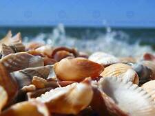 PHOTOGRAPH SEA SHELLS BEACH SAND HOLIDAY FINE ART PRINT POSTER CC1501