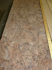 "Walnut Burl wood veneer 16"" x 53"" raw no backing ""AAA"" quality grade 1/42"" thick"