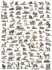 Giftwrap / Poster Print - 18th Century Engraved Prints of Animals - 700 x 500mm